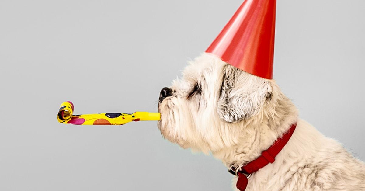 international dog day long sutton